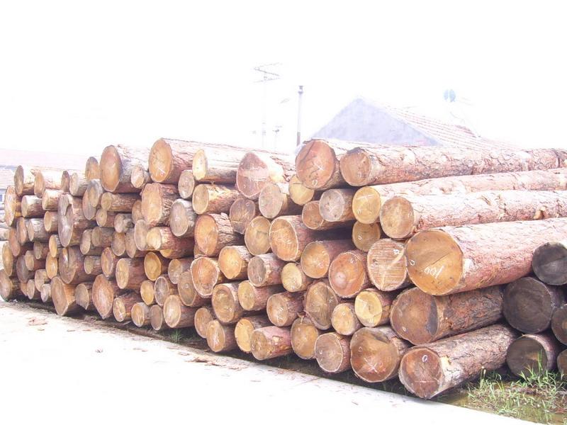 原木/板材     联系信息   地址: 青岛胶南市建材批发市场